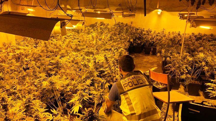 Laboratori de cultiu de marihuana desmantellat a Gandia