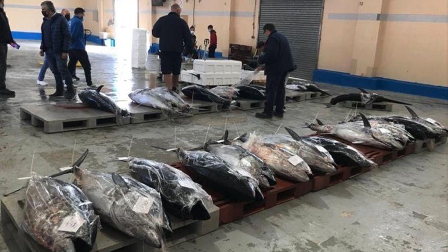 Pescadors de tonyina en la modalitat olímpica en una llotja valenciana